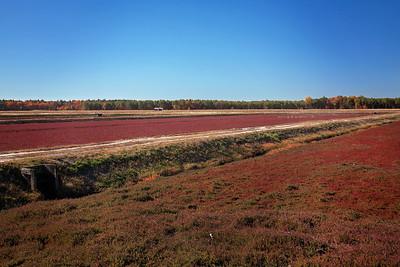 NJ-Burlington-Pine Barrens Native Fruits-Cranberries