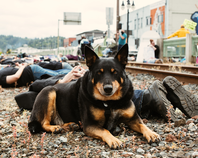 BLM-Protests-coos-bay-6-7-Colton-Photography-106.jpg