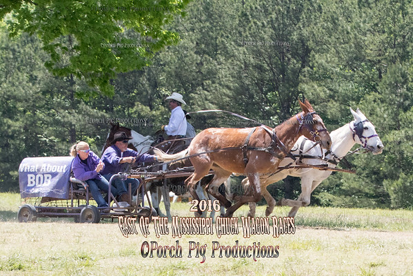 "52"" Mules Sunday East Of The Mississippi Chuckwagon Races"