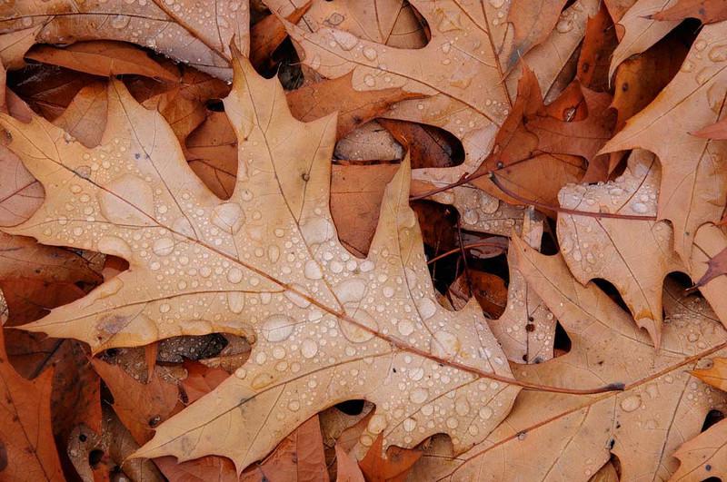 leaf-and-drops.jpg