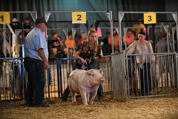 Tippecanoe Co. 4-H Hog Show, Lafayette, IN