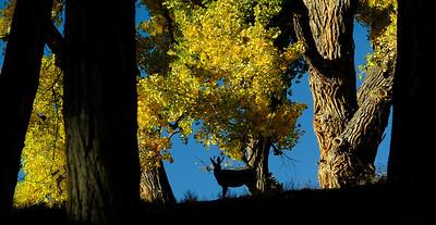 Ranch Life - Fall