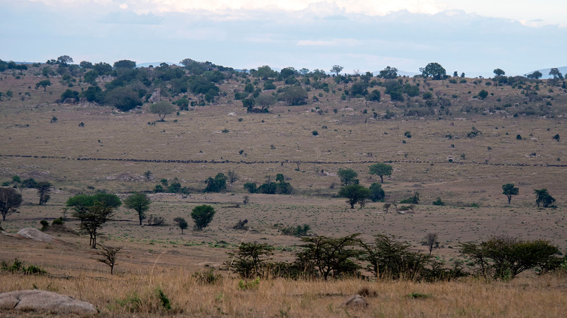 Tanzania-Serengeti-National-Park-Safari-02.jpg
