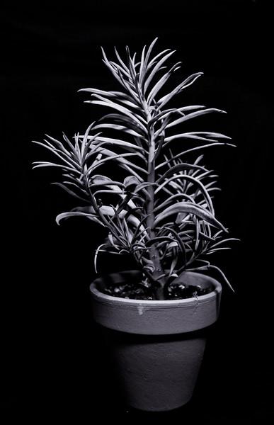 succulent 111419-0429.jpg