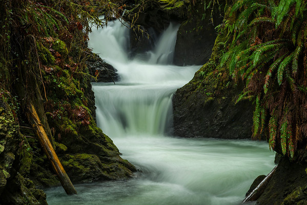 Waterfalls in Quinault Rain Forest
