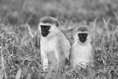 Tanzania_2014