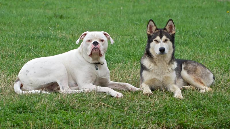 Gus & Aurora