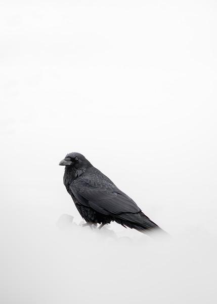 Raven Minimalism