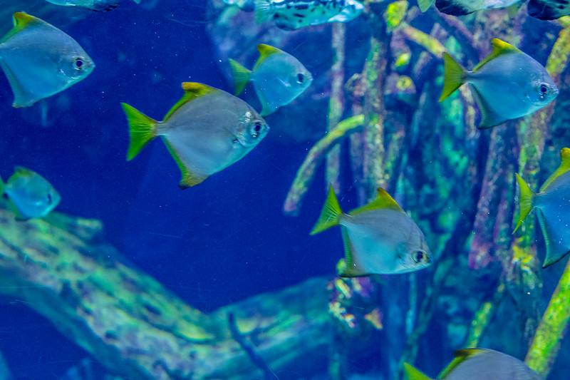 GA Aquarium with Linc, Ali & Abe-129.jpg