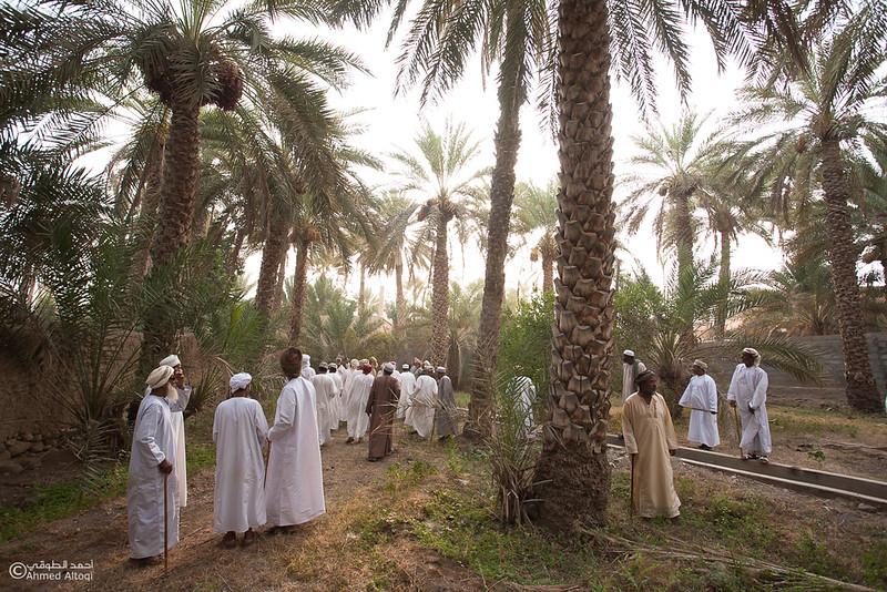 Palm Tree Auction 7- Mudhaibi.jpg