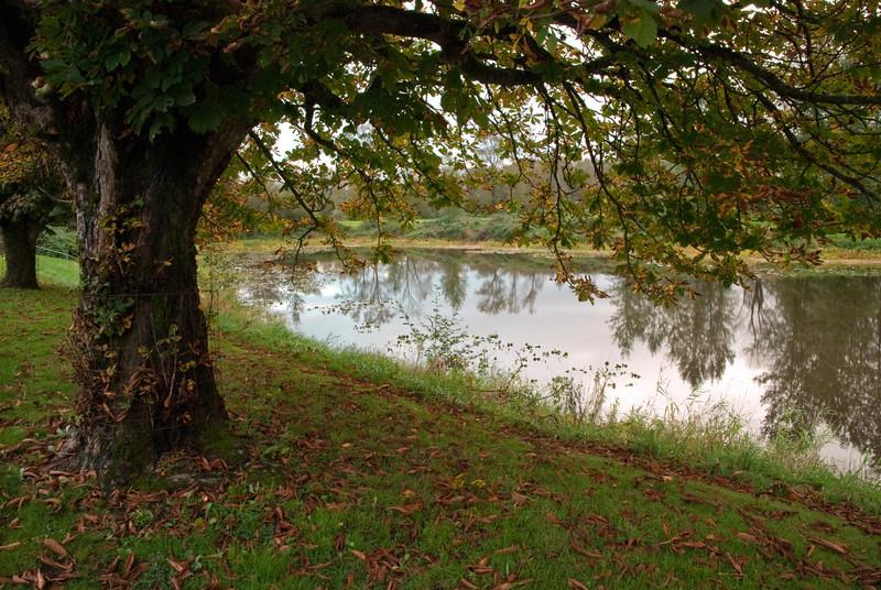 pond reflection.jpg