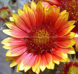 023-button_flower-warren_co-26jun06-4211