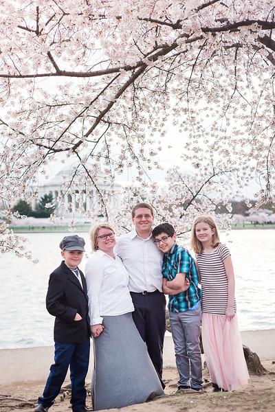 CherryBlossom-22.jpg