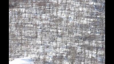 Castelluccio di Norcia neve slideshow