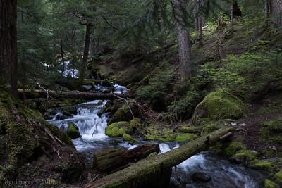 Huckelberry Creek 20150525