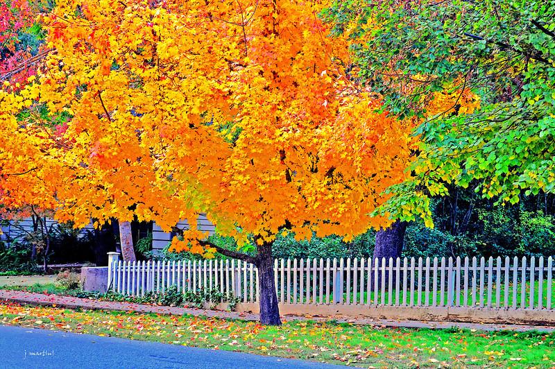 november colors 11-23-2011.jpg