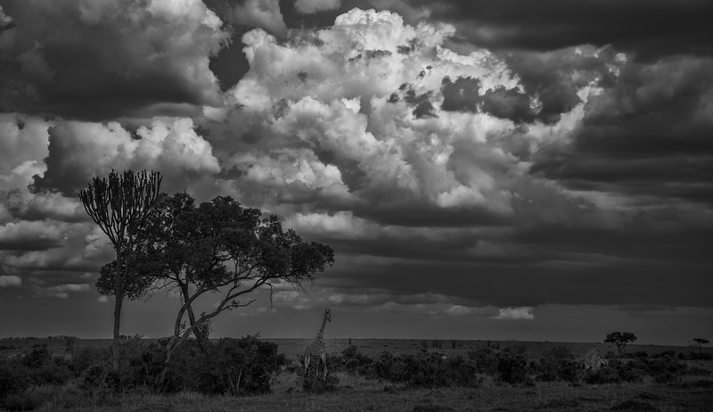 Kenya-102013-825-Edit.jpg