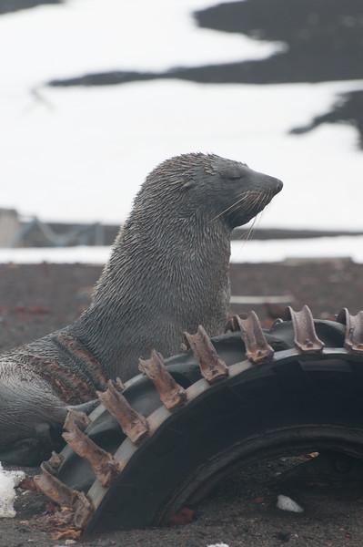Antarctica 2015 (91 of 99).jpg