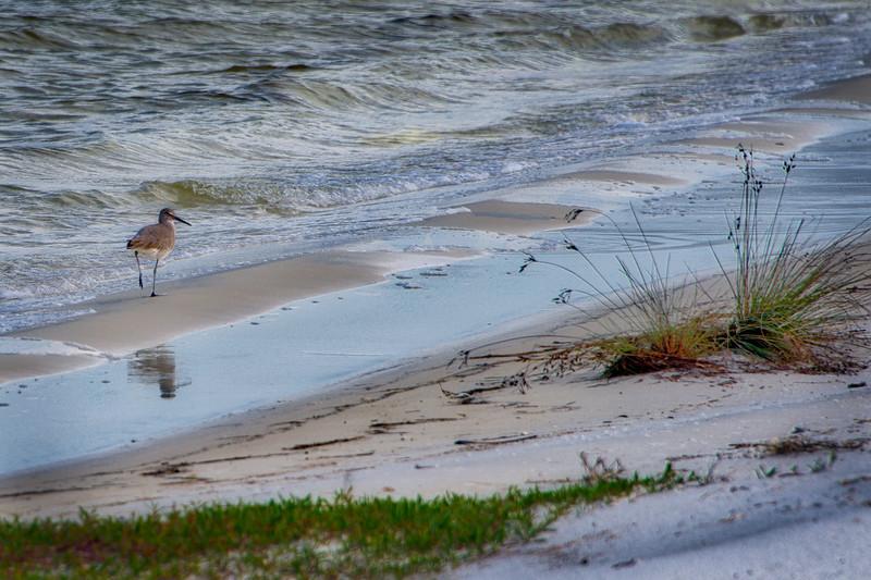 Beach 5 W Bird PS_DSC4530_HDR.jpg