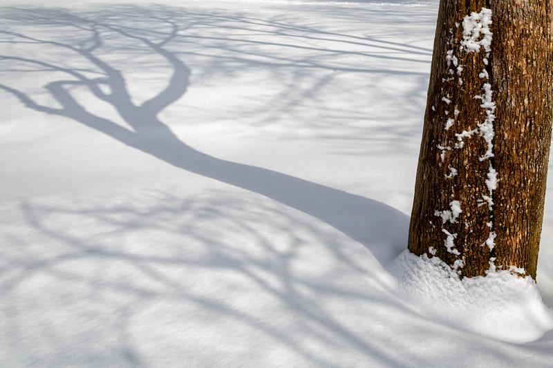 ~Shadow Dancer~