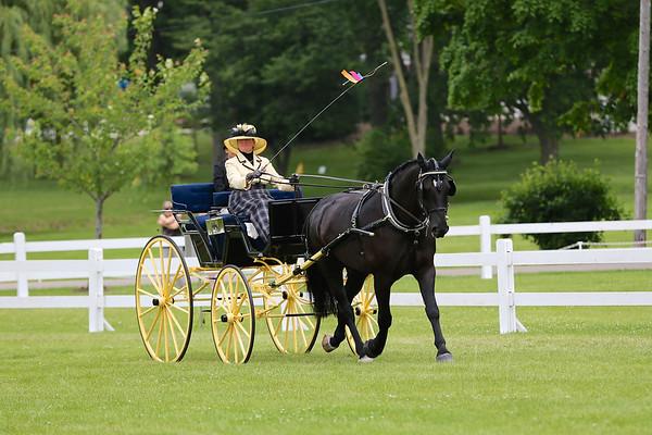 2015 CCF NOVICE HORSE/PONY