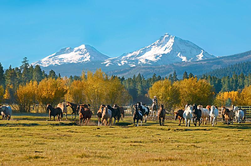 2015-0519-BBR-Cowgirl-bringing-in-the-herd_KateThomasKeown_DSC9910rt.jpg