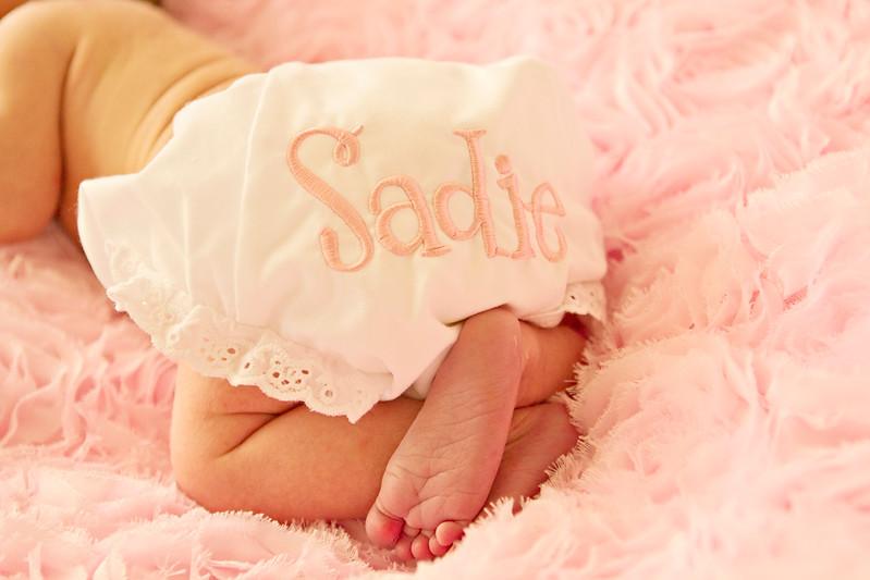 Sadie 024copy.jpg
