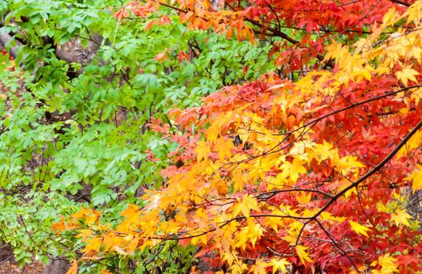 Arnold Arboretum 11-9-13