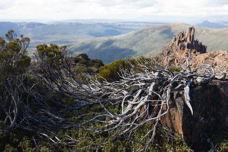 Tasmania_2015_247.jpg