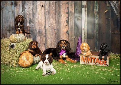 Pawsnap Pet Photography 2020