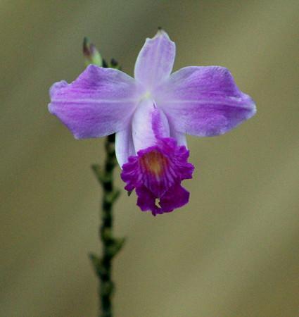 Flowers at Tambor Tropical