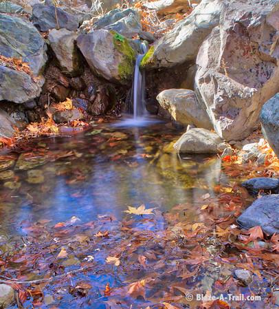 Miller Canyon Trail, Huachuca Mountains