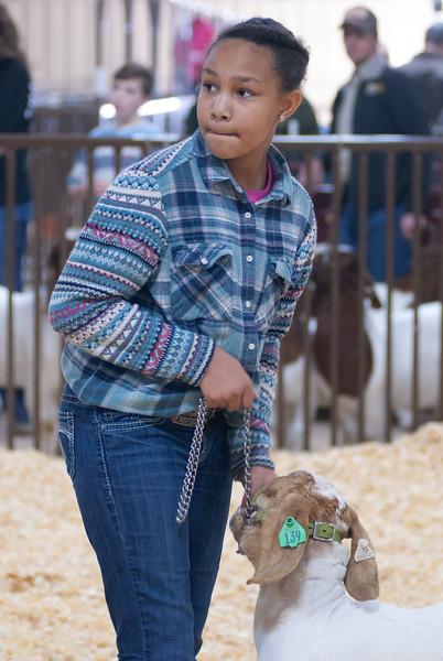 kay_county_showdown_goats_20191207-51.jpg