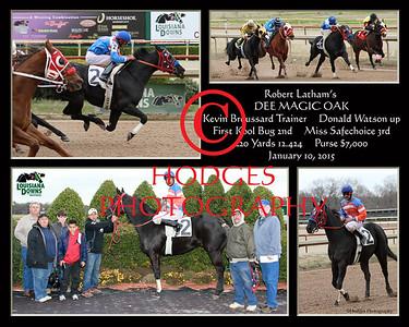 Quarter Horse 2015 Season