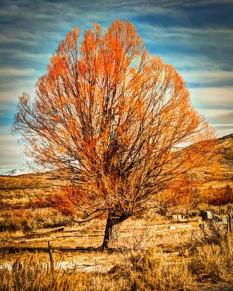 Junk Tree HDR.jpg