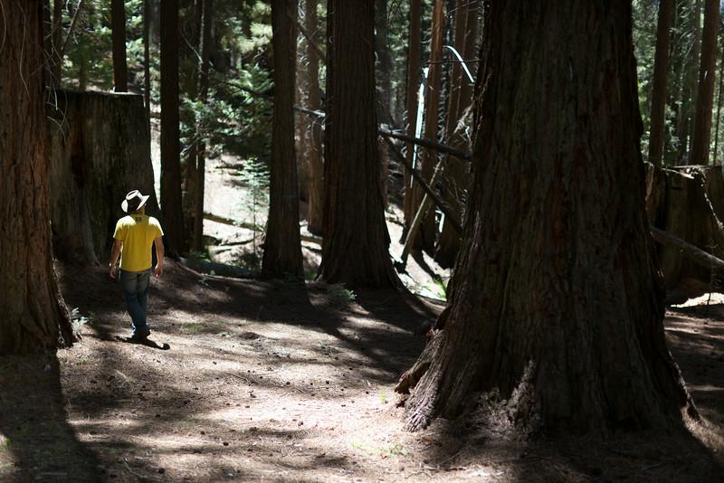 Sequoia_0151.jpg