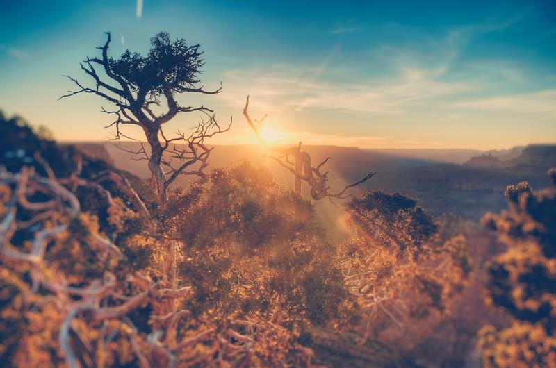 Desert Point Foliage