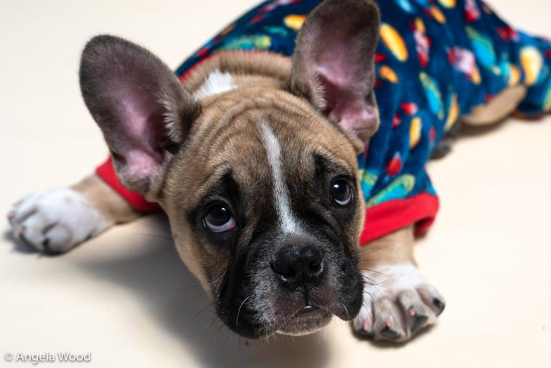 Puppies42.jpg