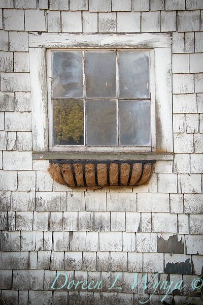 Build a fall window box - How to_7369.jpg