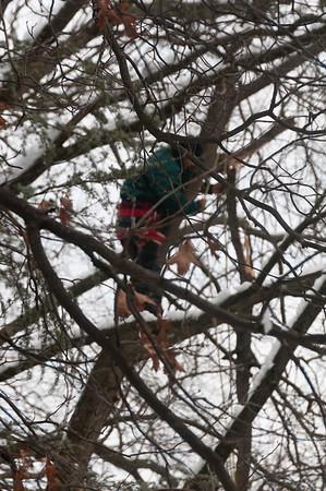 Tree Limb Removal