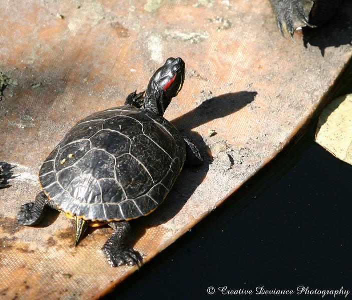 Photo taken at Eldorado Park Nature Center in Long Beach