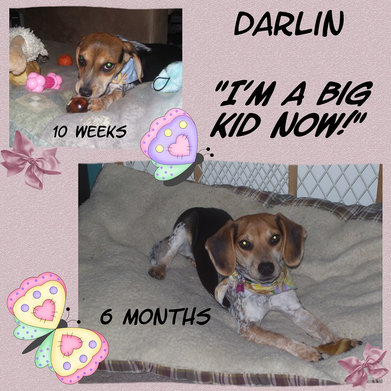 Darlin-Big-Kid-000-Page-1.jpg