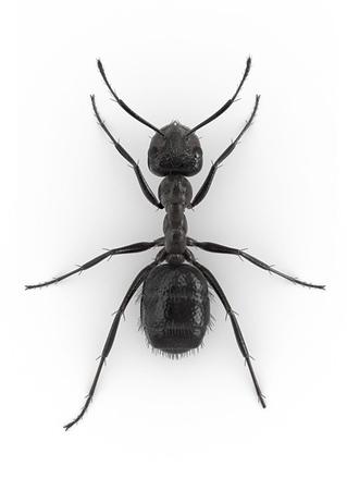 Ant_nusiance.jpg
