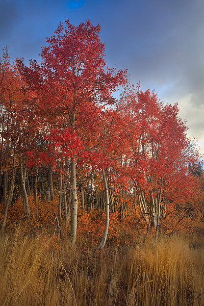 Inyo_National_Forest_Fall_Color_T6A5557.jpg