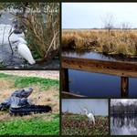 Brazos Bend State Park-001.jpg