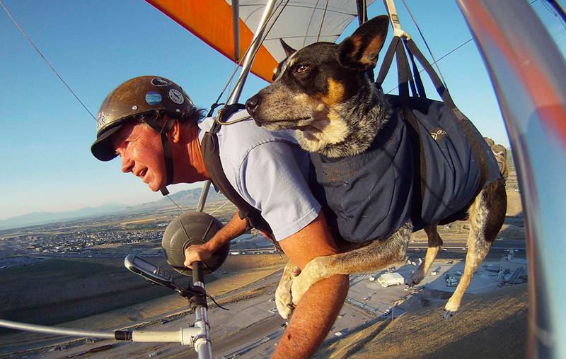 . Dan McManus and his service dog Shadow hang glide near Salt Lake City, Utah, July 22, 2013. REUTERS/Jim Urquhart