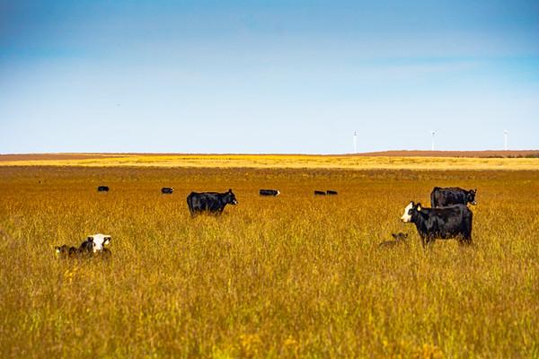 Peterson Ranch Edits  Mark Johnson