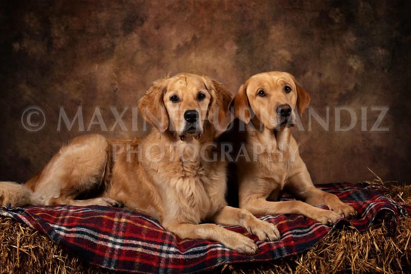Dogs-4604-Edit.jpg