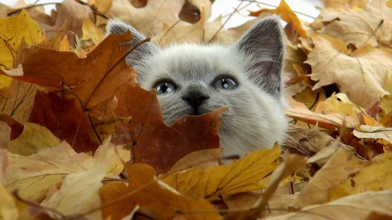 kitten_leaves_08.mov