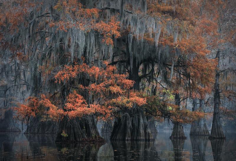 Cypress_Swamps_1117_PSokol-853-Edit.jpg